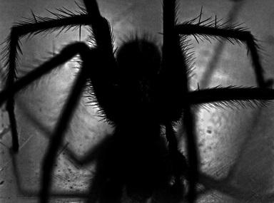 פחד מעכבישים ארכנופוביה חרקים